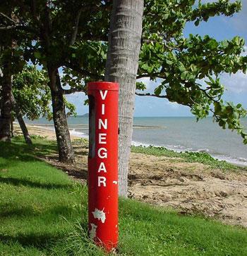 Scorte di aceto sulle spiagge australiane
