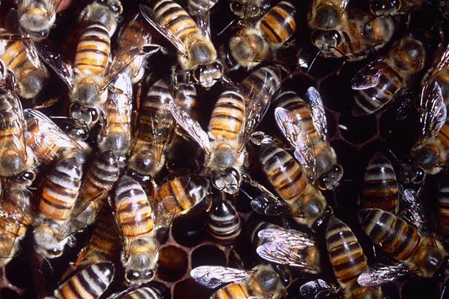 Un alveare pieno di api killer