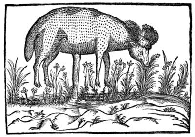 La misteriosa creatura leggendaria Barometz