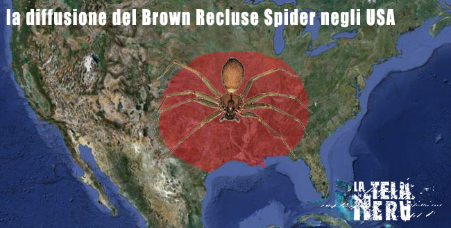 La diffusione del brown recluse spider negli USA