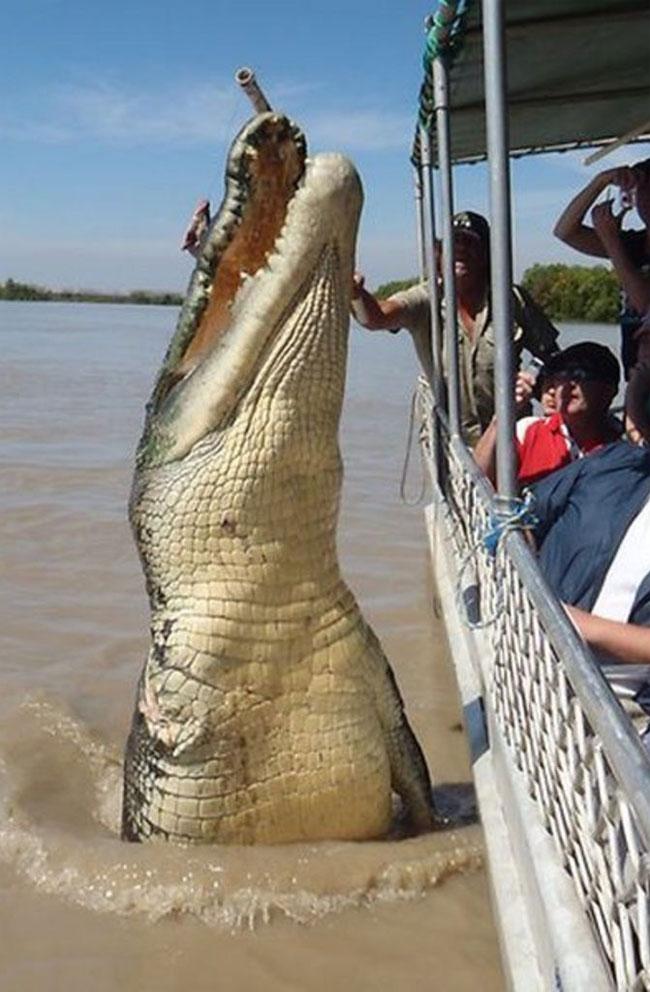 Un coccodrillo marino salta fuori dall'acqua