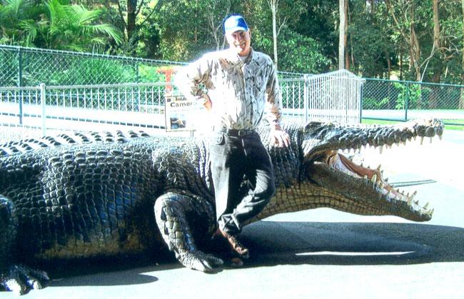 Le proporzioni di un coccodrillo estuarino e l'uomo