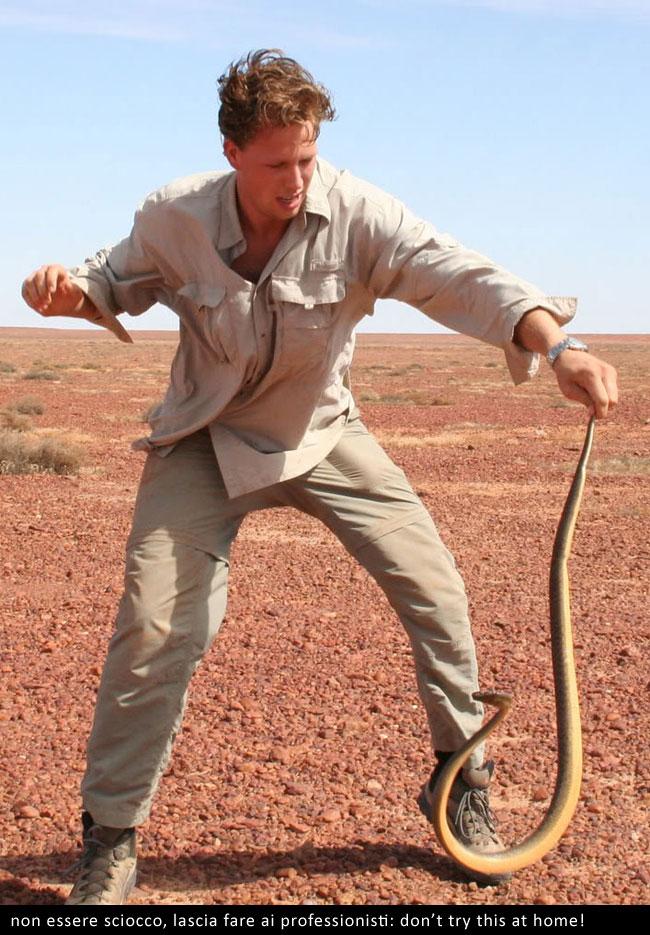 Un fierce snake maneggiato da un esperto