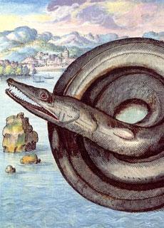 Il serpente marino il predatore dell 39 oceano mostri e - Foto di animali dell oceano ...