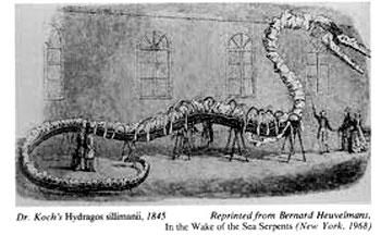 Il serpente marino il predatore dell 39 oceano mostri e - Serpente collegare i punti ...