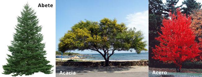Simboli e significato delle piante Abete, Acacia e Acero