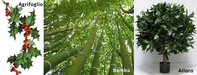 Simboli e significato delle piante Agrifoglio, Bambù e Alloro