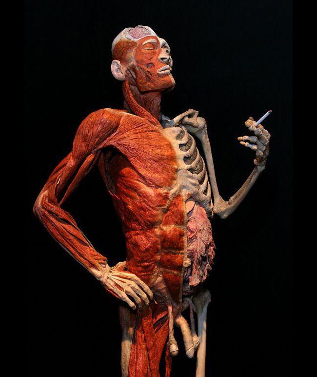 Un fumatore incallito, opera di Gunther von Hagens