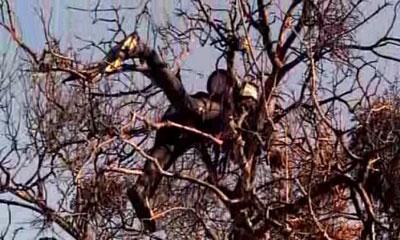 Un sommozzatore morto trovato su un albero bruciato, da CSI Las Vegas