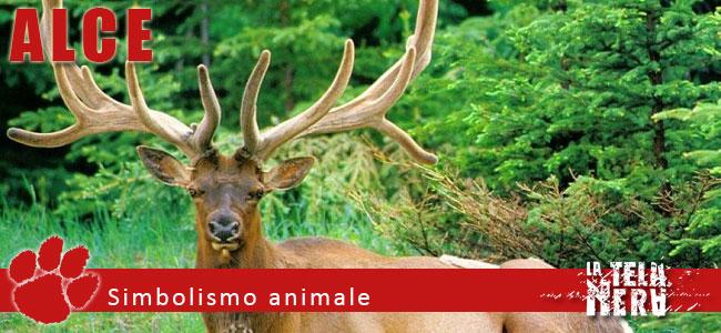 Simboli animali: il significato dell'Alce