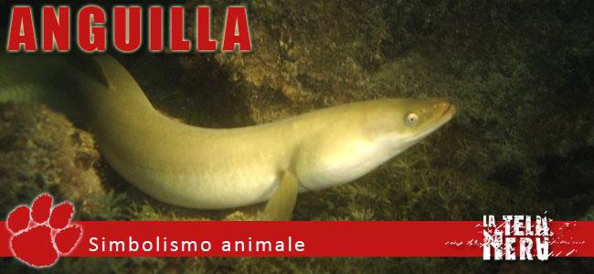 Simboli animali: il significato dell'Anguilla