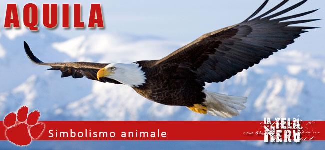 Simboli animali: il significato dell'Aquila