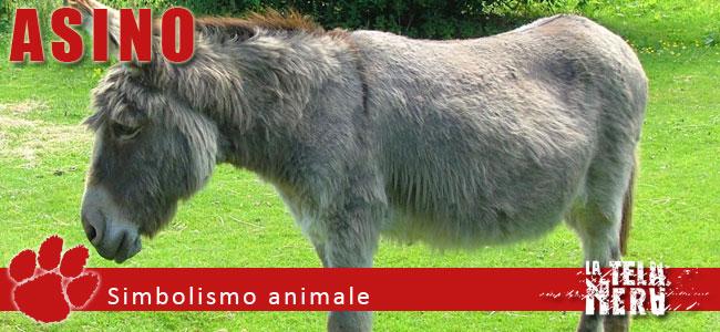 Simboli animali: il significato dell'Asino