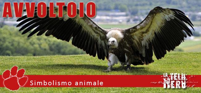 Una immagine per il simbolismo dell'animale avvoltoio