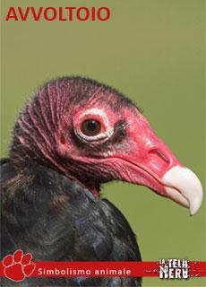 I significati dell'animale Avvoltoio