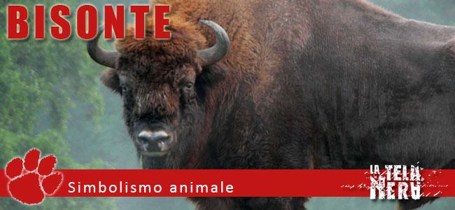 Simboli animali: il significato del Bisonte