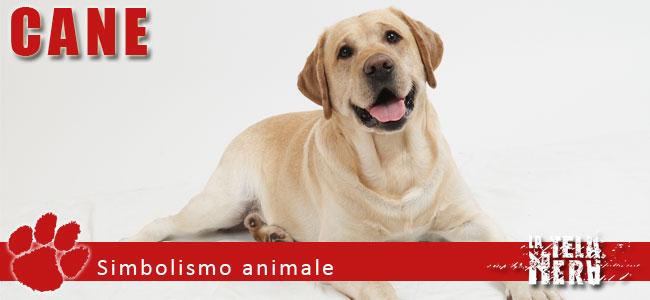 Simboli animali: il significato del Cane