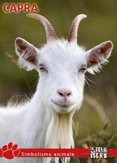 La capra come simbolo e i suoi significati tra mitologia - Immagini da colorare capra ...