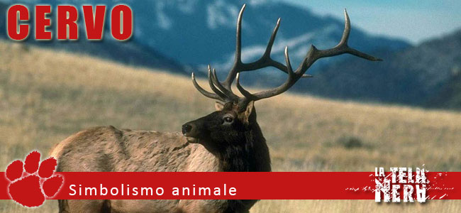 Simboli animali: il significato del Cervo