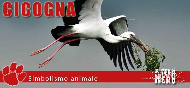 Simboli animali: il significato del Cicogna