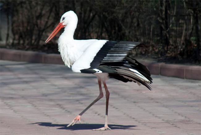 Una foto di una cicogna