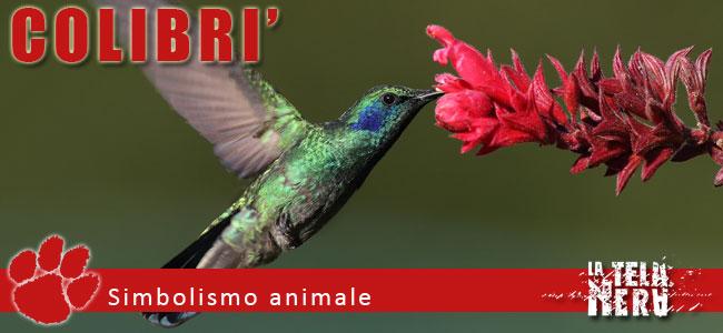 Simboli animali: il significato del Colibri