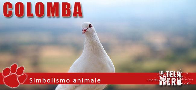 Simboli animali: il significato del Colomba