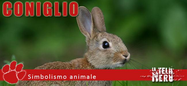 Simboli animali: il significato del Coniglio