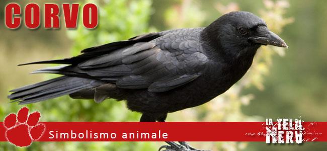 Simboli animali: il significato del Corvo