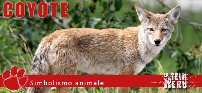 Simboli animali: il significato del Coyote