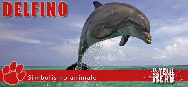 Simboli animali: il significato del Delfino
