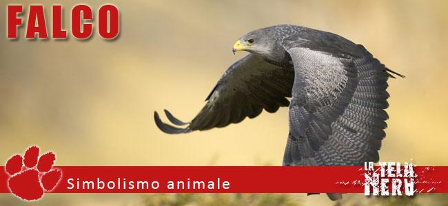 Simboli animali: il significato del Falco