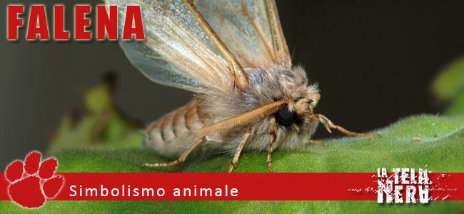 Simboli animali: il significato della Falena