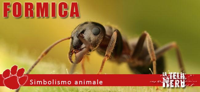 Simboli animali: il significato del Formica