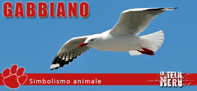 Simboli animali: il significato del Gabbiano