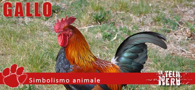 Simboli animali: il significato del Gallo