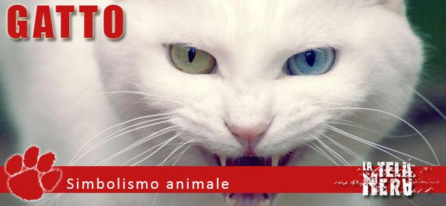 Simboli animali: il significato del Gatto
