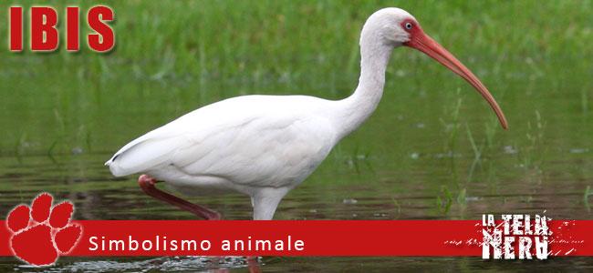 Simboli animali: il significato dell'Ibis