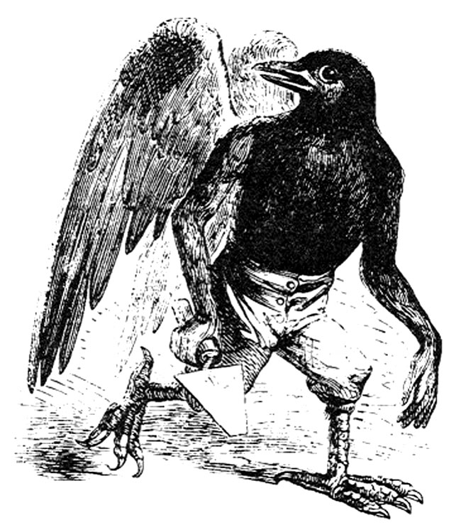 Simbolo Animale Significato Del Corvo Tra Mitologia Ed