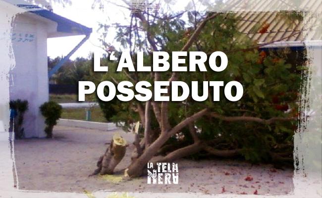 Maldive: l'albero posseduto dagli spiriti malvagi è stato abbattuto