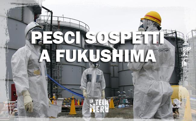 Orribili pesci mutanti radioattivi pescati a Fukushima