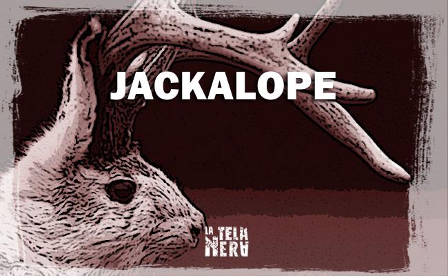 Jackalope la creatura leggendaria coniglio con corna di cervo